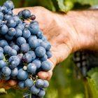 Servizi vitivinicoli